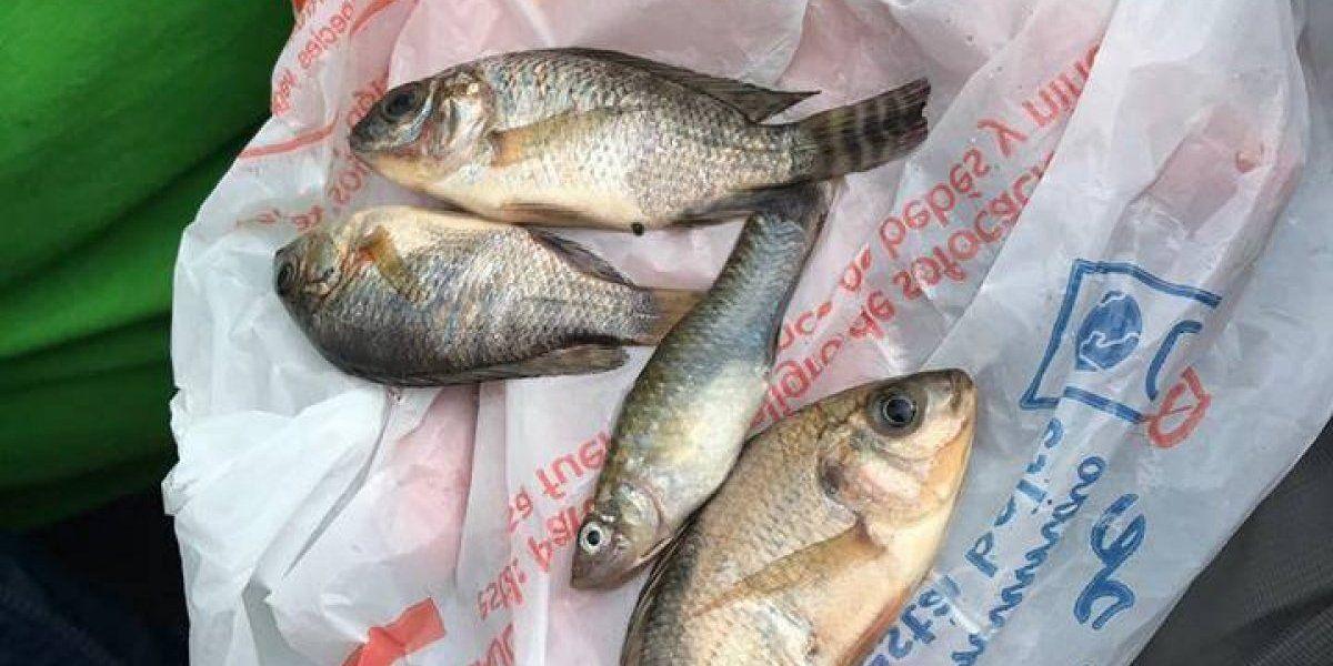 Lluvia de peces en Tampico