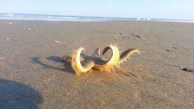 La increíble caminata de una estrella de mar en su regreso al océano
