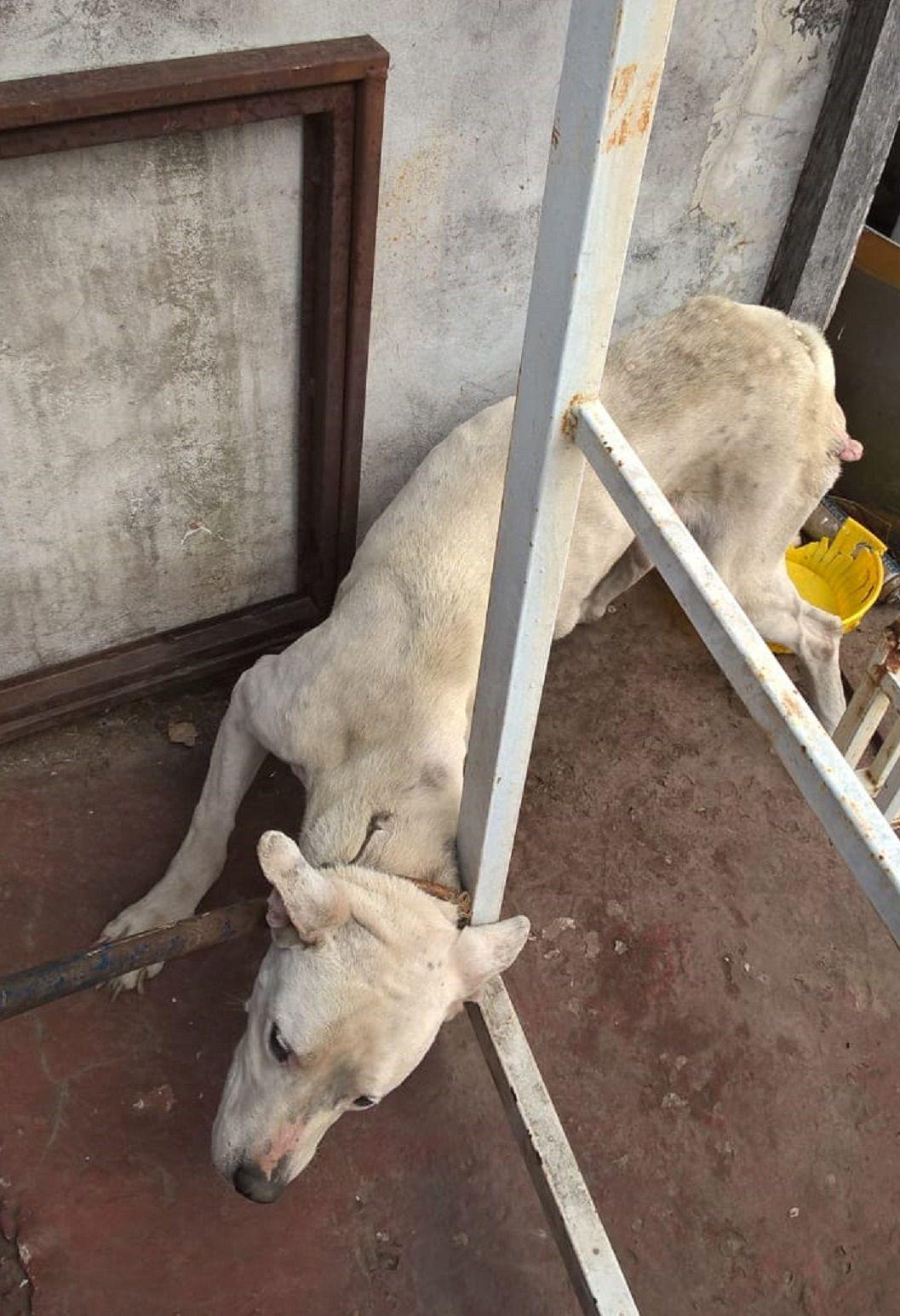 Rescataron a un perro e imputaron a la dueña por maltrato y crueldad animal