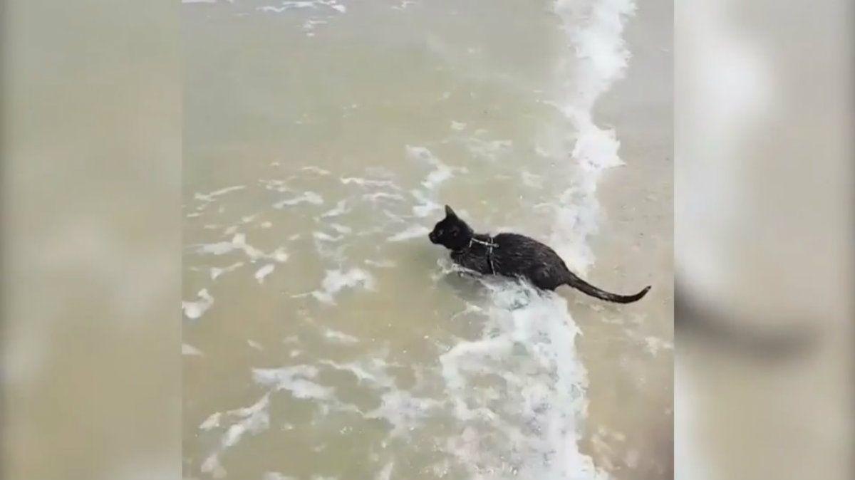 Las andanzas de esta gatita se volvieron viral en días