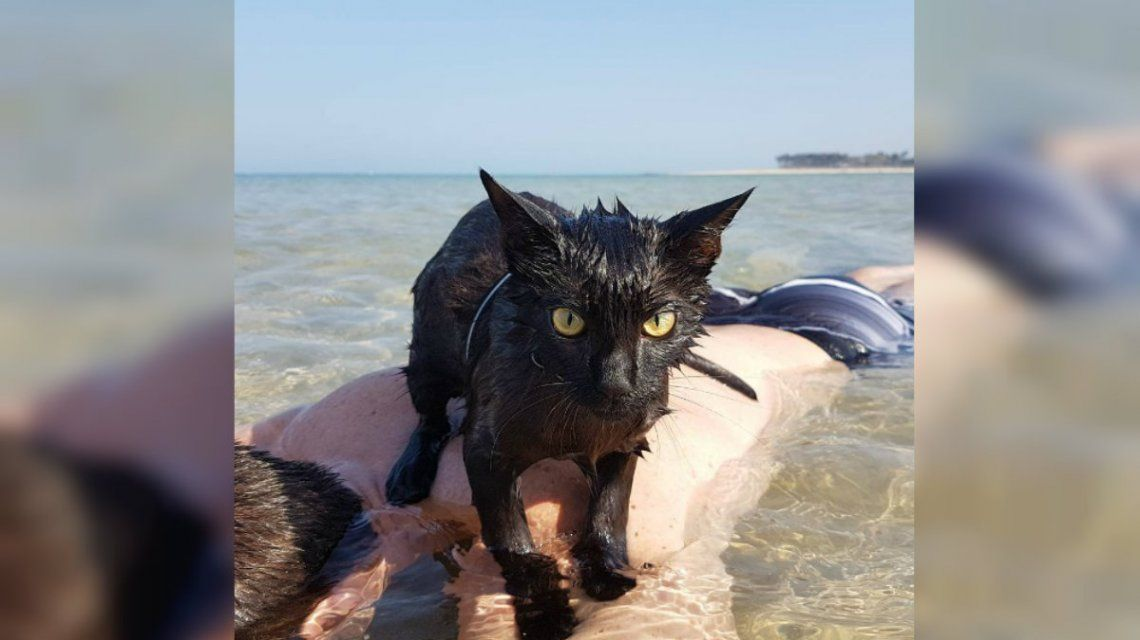 Nathan ama la playa igual que sus dueños