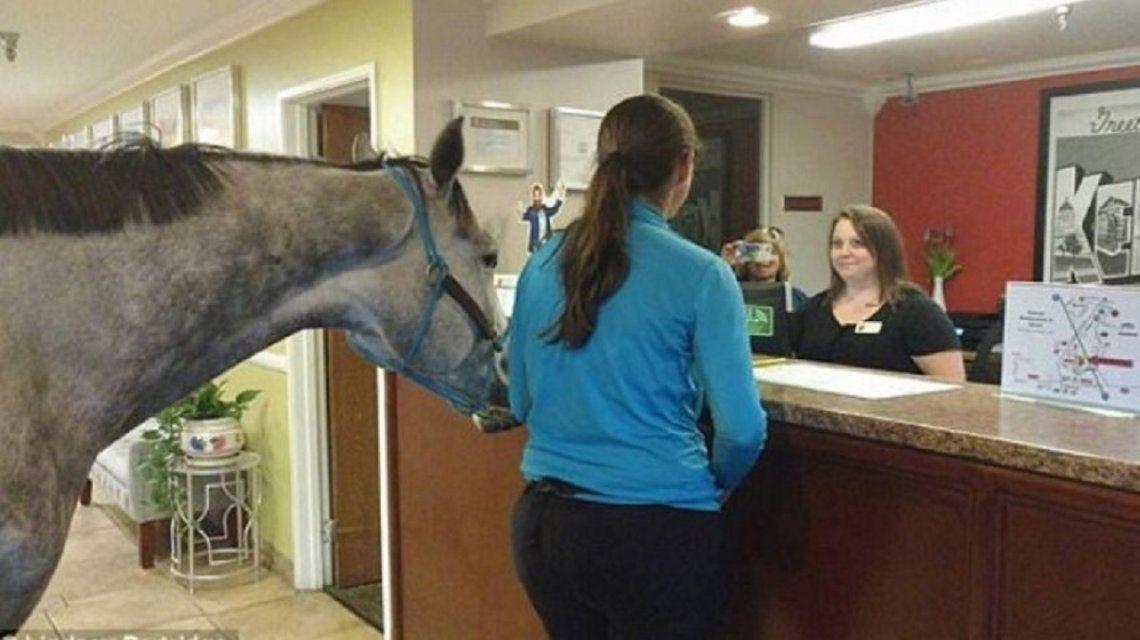 La mujer y su yegua en el hotel