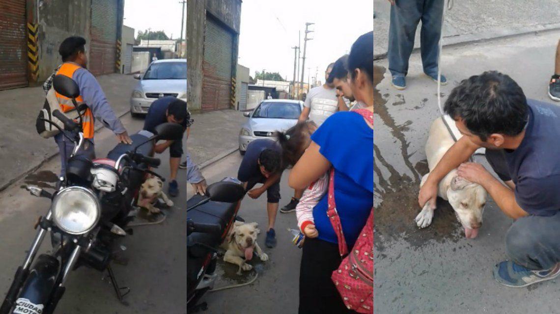 El perro fue rescatado.