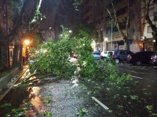 Árbol caído en el barrio porteño de Almagro