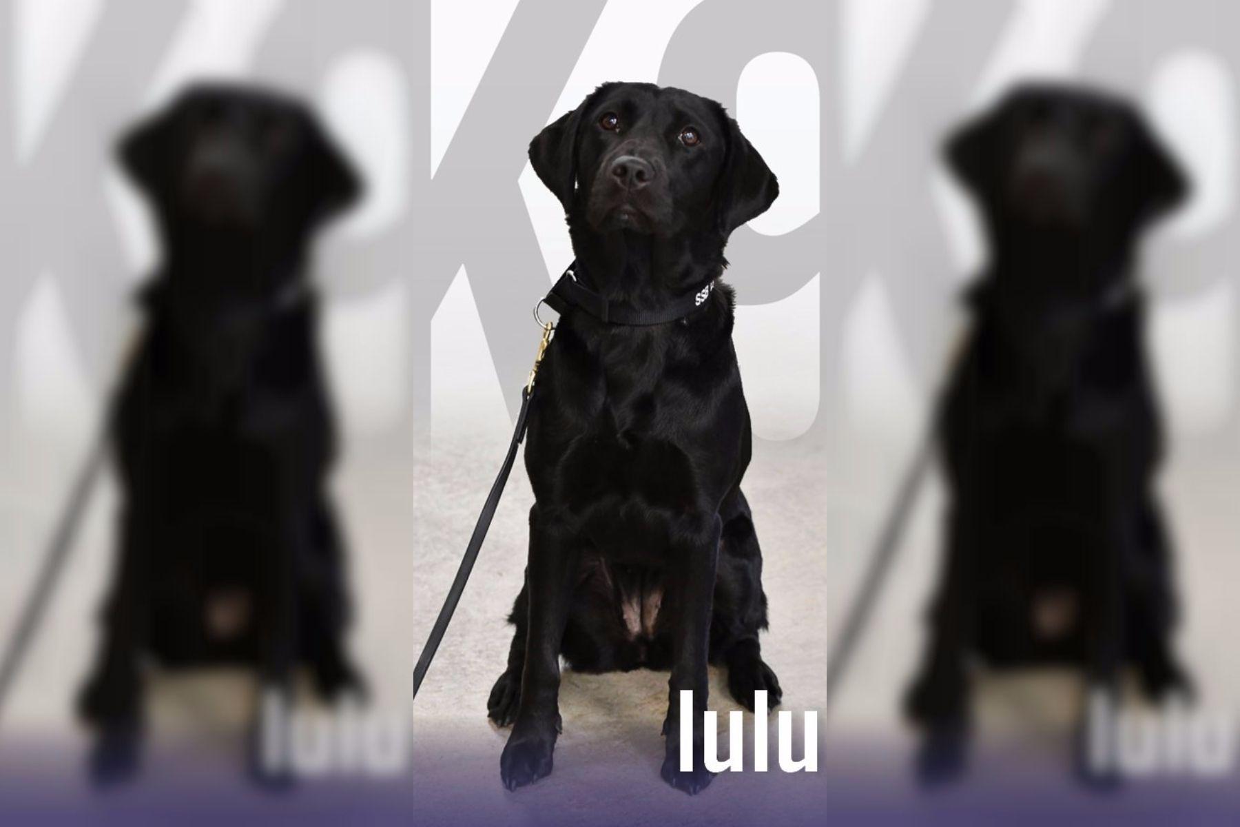 Lulu, la perrita a la que la CIA despidió por negarse a trabajar
