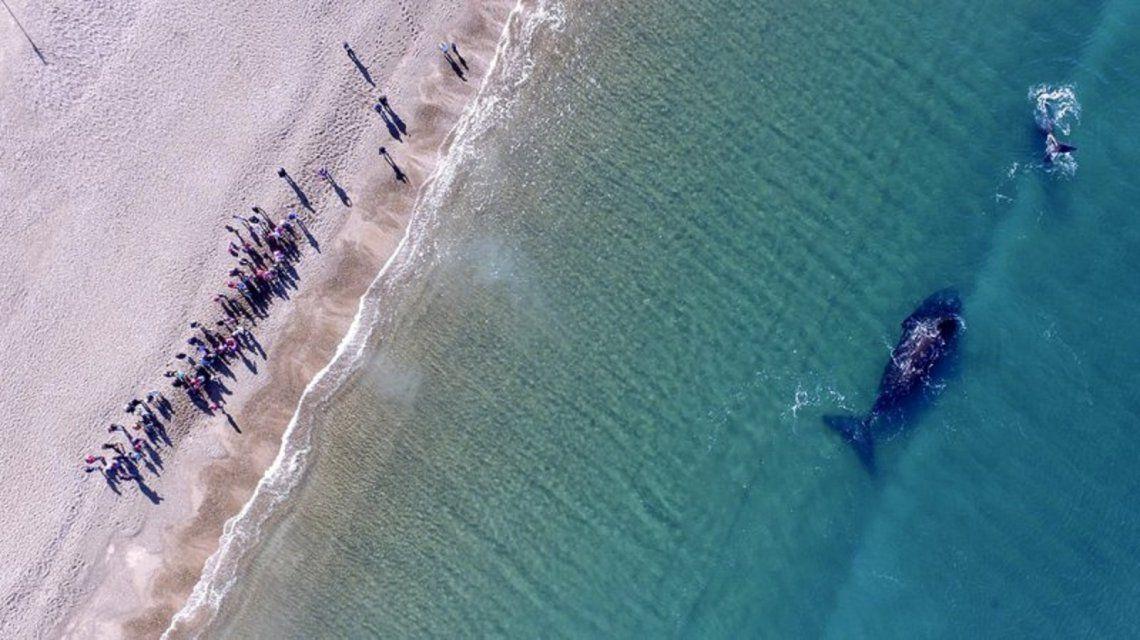 Imperdible: así fue la increíble llegada de ballenas a la Patagonia