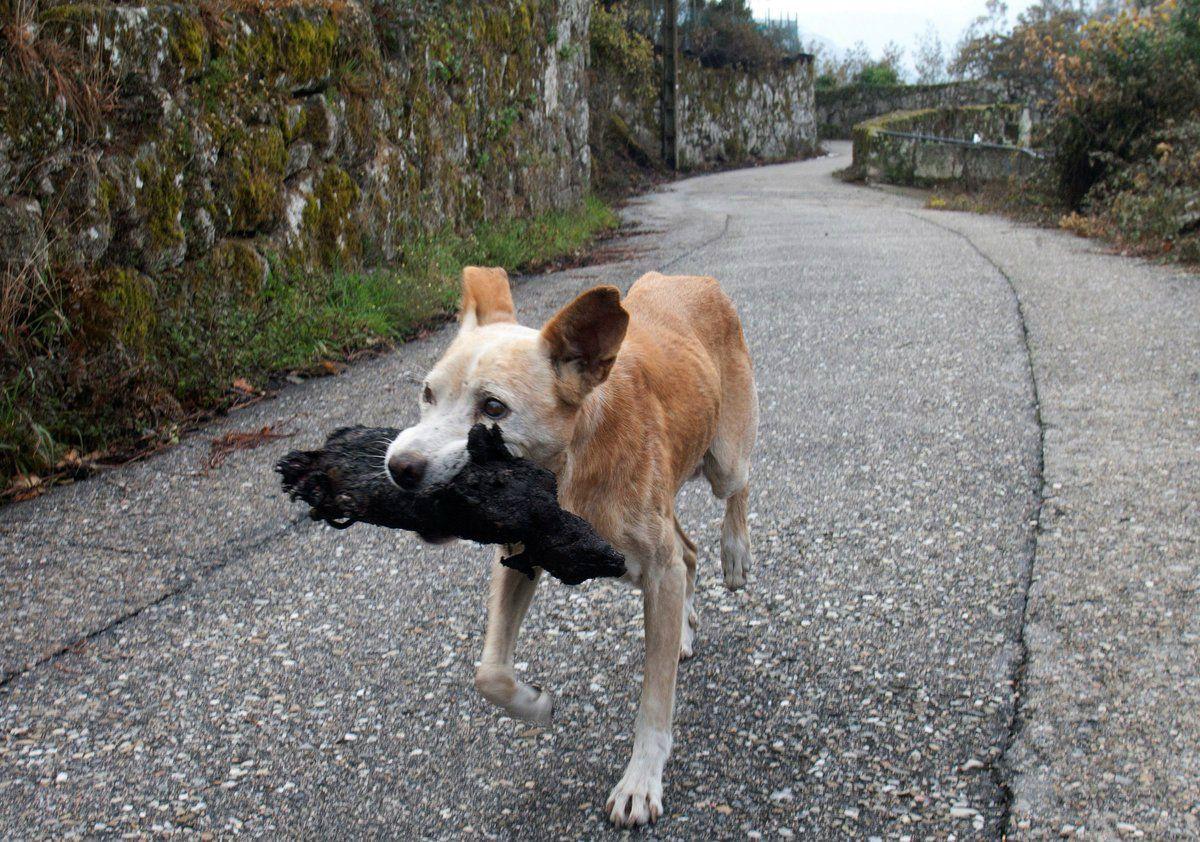 La perra recuperó el cuerpo calcinado de su cachorro