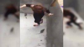 Thuy Say se enfrentó a la rata con un palo, pero encontró resistencia