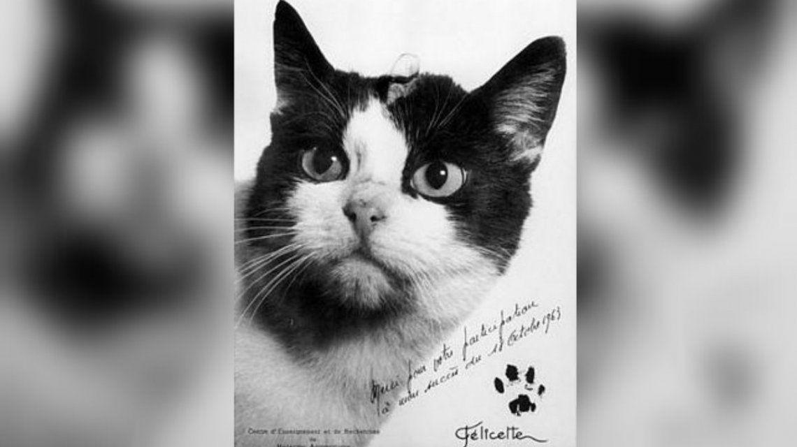 Felicette fue eutanasiada para descubrir cómo le afectó la falta de gravedad
