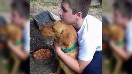 Rocco, el perro que caminó 7 días para volver a su hogar y reencontrarse con su familia