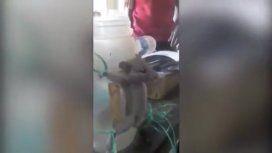 La ratita sufrió a manos del sádico tendero de la India