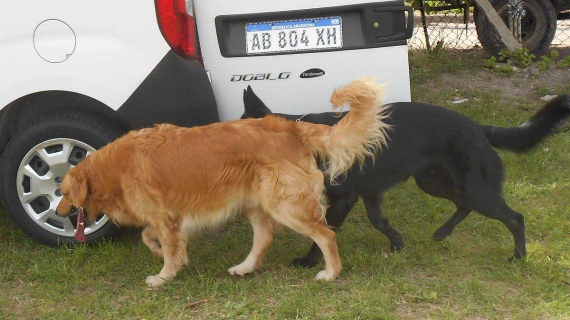 Maldad pura: robaron una camioneta con tres perros adentro y los dejaron morir