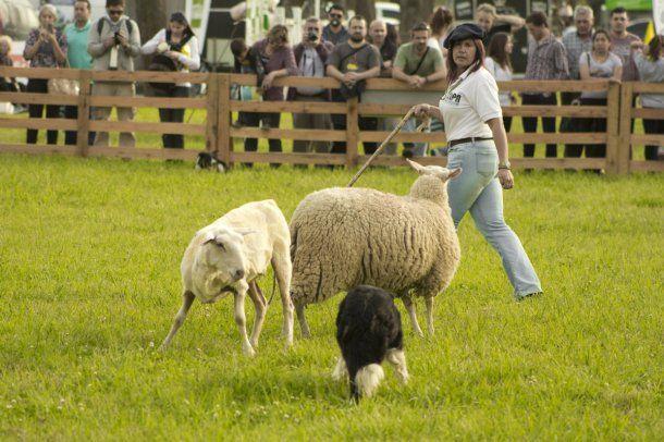 Habrá demostraciones de destreza con perros de pastoreo