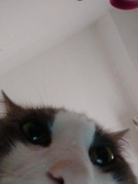 Sinatra, el gato saca selfies