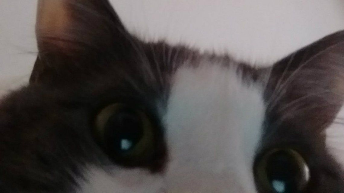 Un gatito listo para su primer plano