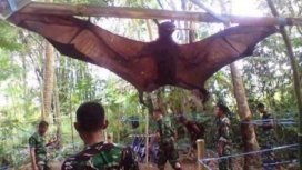 Atrapan un gigantesco murciélago de casi dos metros en Filipinas