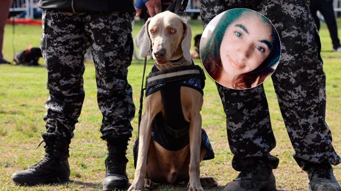 El perro Bruno, clave en la investigación por el crimen de Anahí, buscará a Camila Sotelo