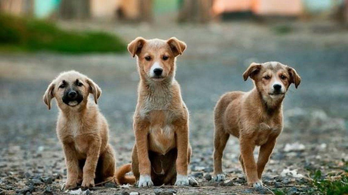 Pedirán cambiar la ley para poder condenar a cuatro años de cárcel por maltrato animal
