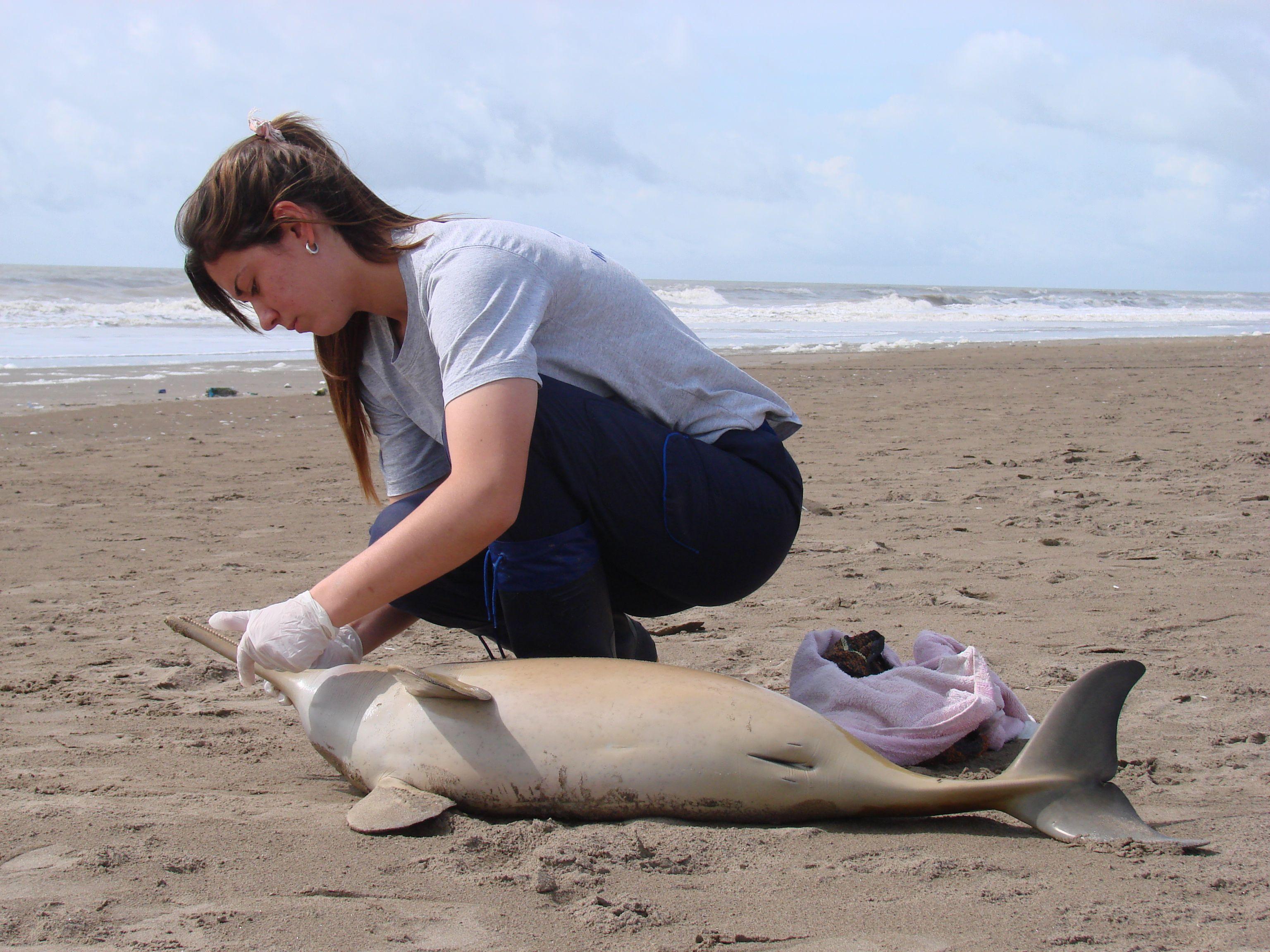 Alerta por la aparición de cuatro delfines muertos en la Costa