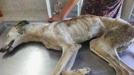 Una perra fue matada a palazos en Tres Arroyos.