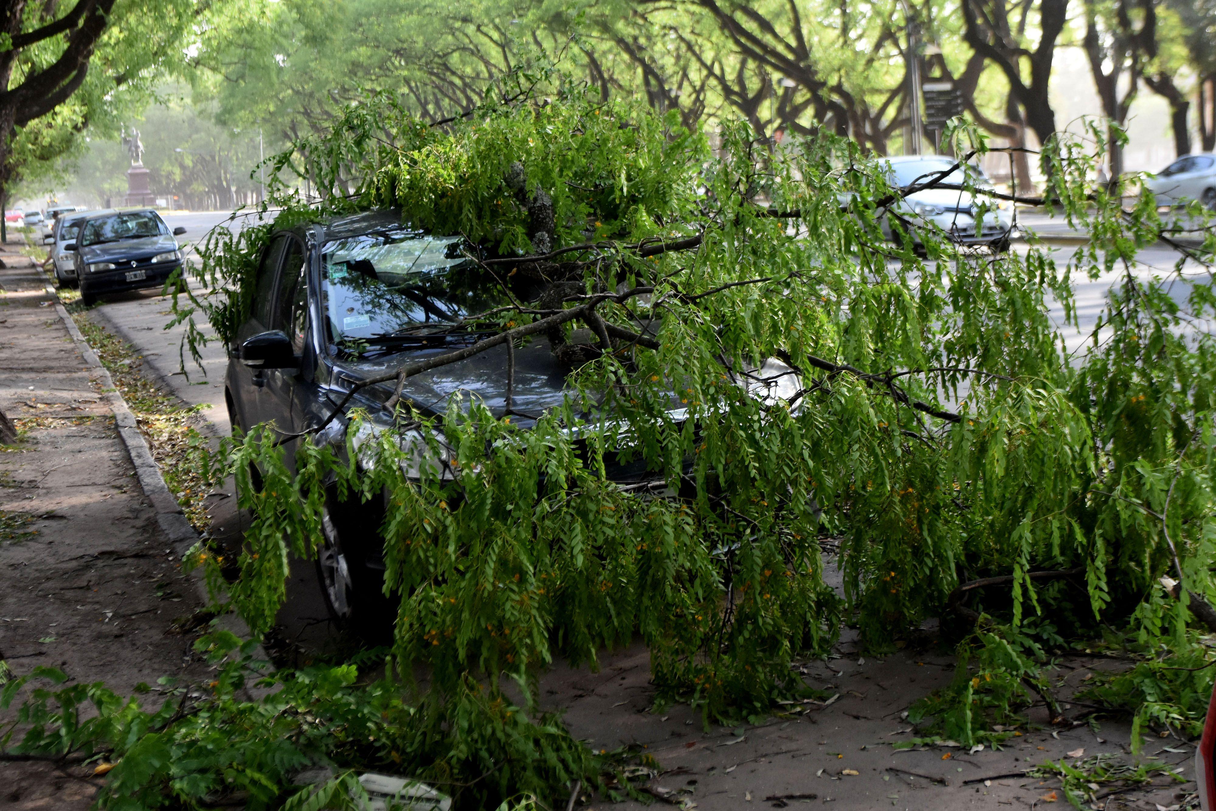 El temporal causó la caída de árboles y carteles en la vía pública