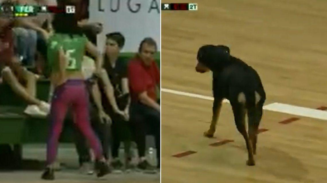 Inédito: suspendieron el partido dos veces por culpa de una hincha y un perro
