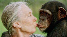 Jane Goodall, la mujer que vivió más de 40 años con monos salvajes