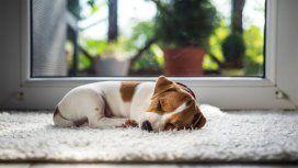 Test: Así se siente tu perro, según cómo duerme