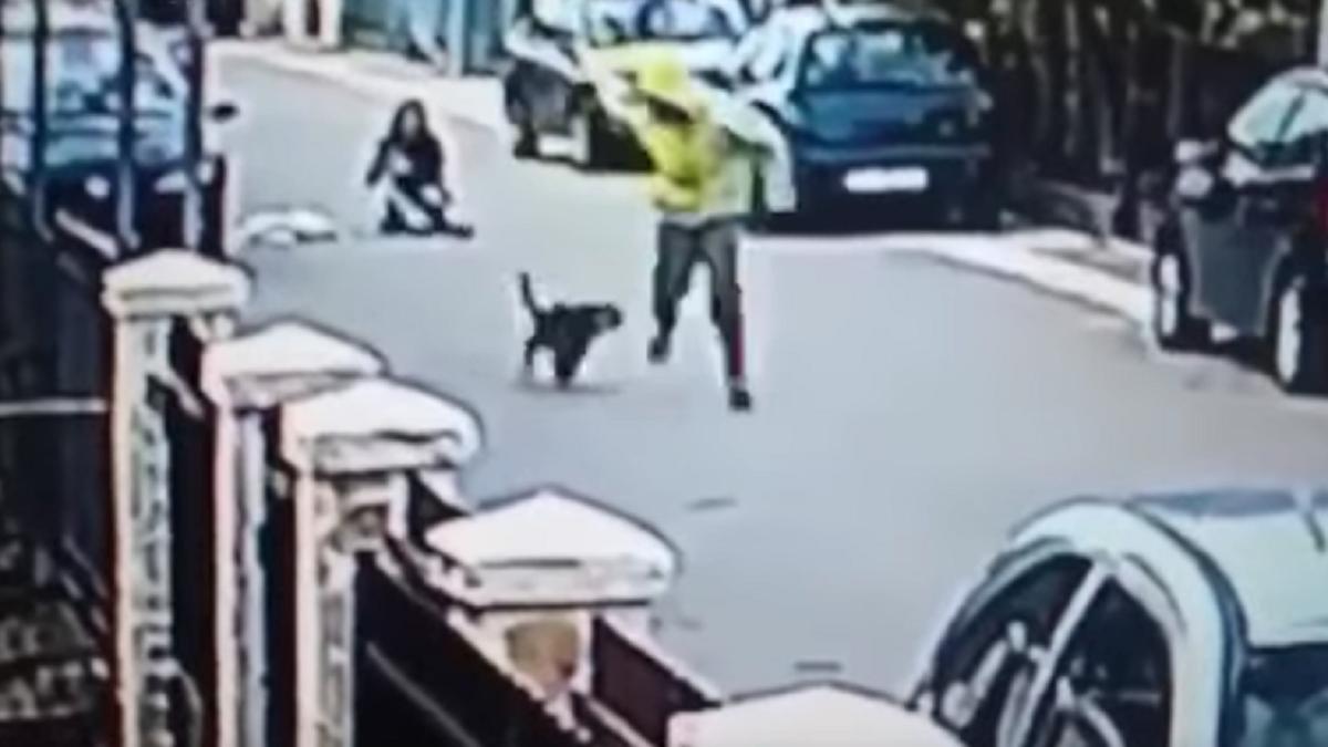VIDEO: Un perro evitó un robo de una manera dolorosa para el ladrón