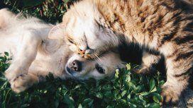 Los perros tienen más neuronas asociadas a la inteligencia que los gatos