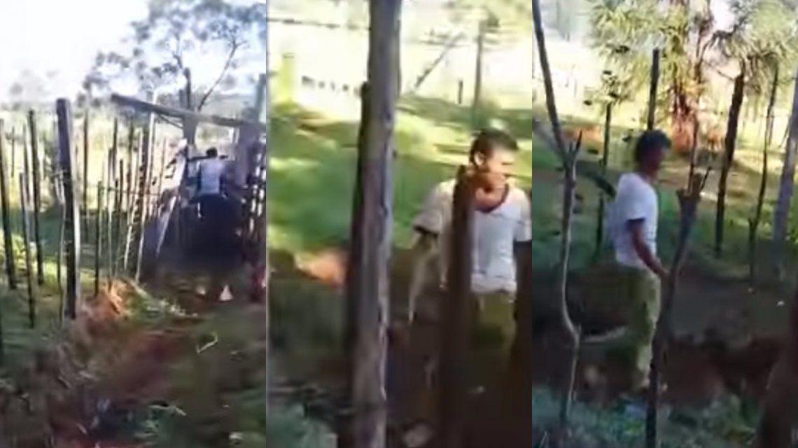 VIDEO: Descubrió a su vecino teniendo sexo con su vaca, lo filmó y lo escrachó