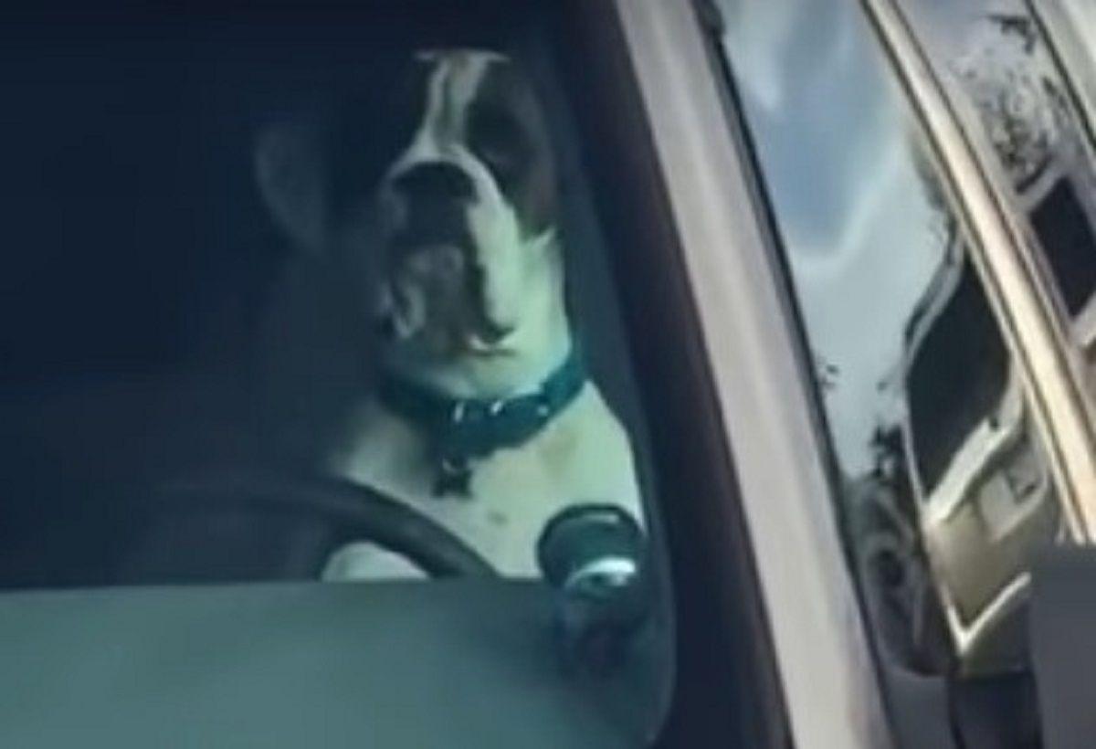 Este perro se cansó de esperar en el auto y protestó de una forma muy especial
