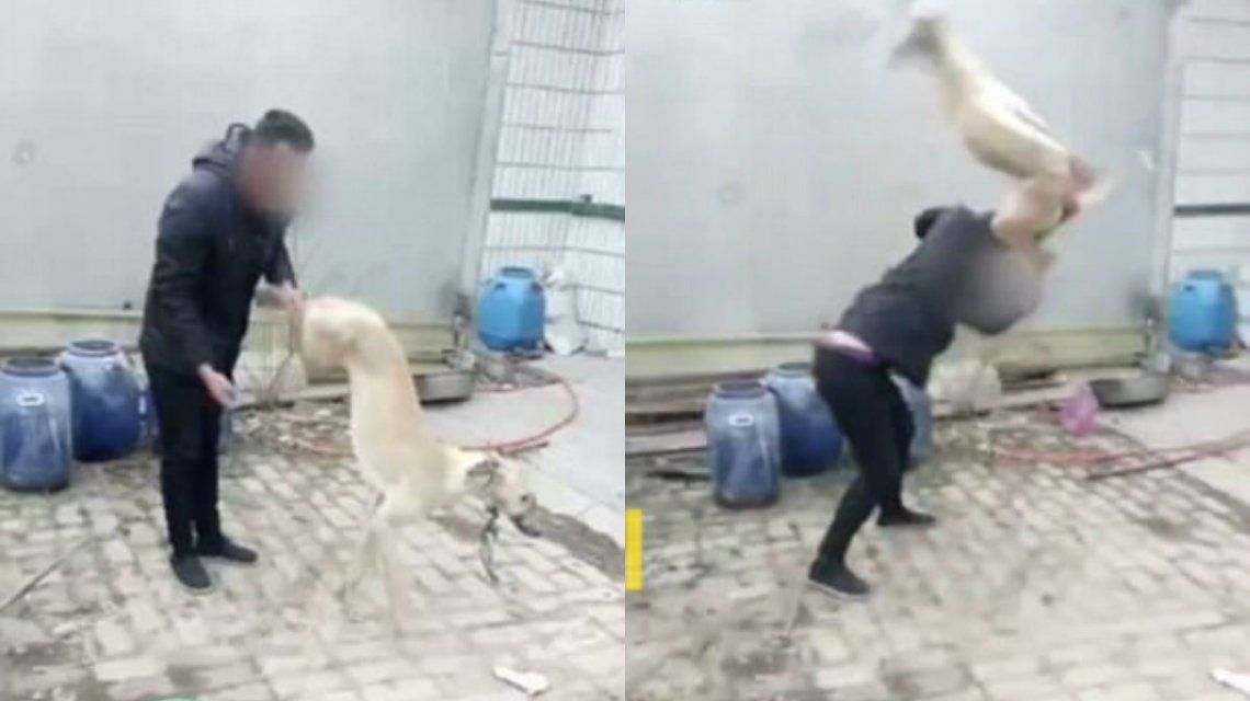 El hombre le estrelló la cabeza contra el piso a su perro para matarlo