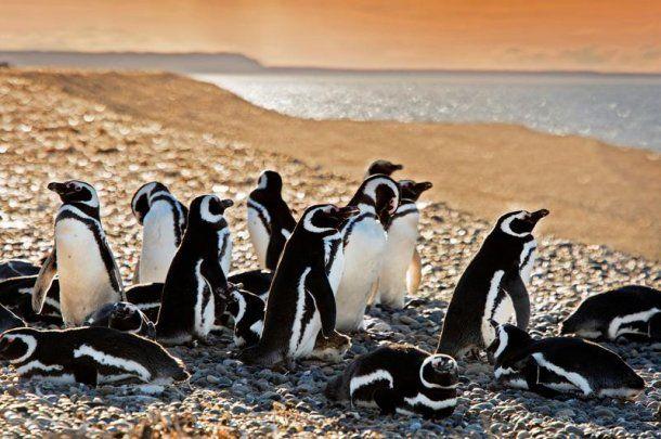 Los pingüinos se pueden ver hasta abril<br>