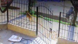El hombre revoleó al perro y lo mató
