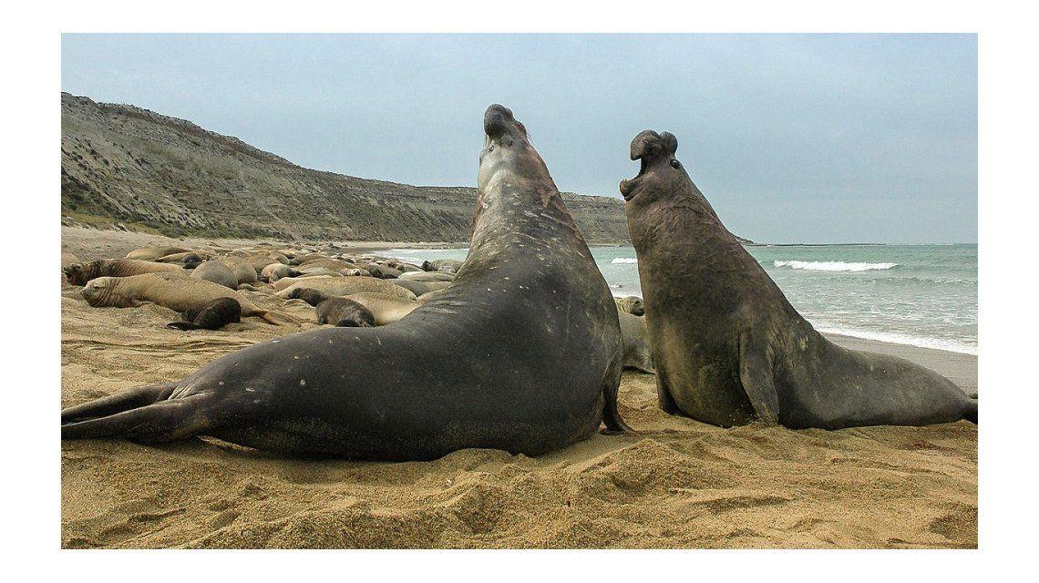 Puerto Madryn: las mejores cuatro estancias para disfrutar del verano 2018