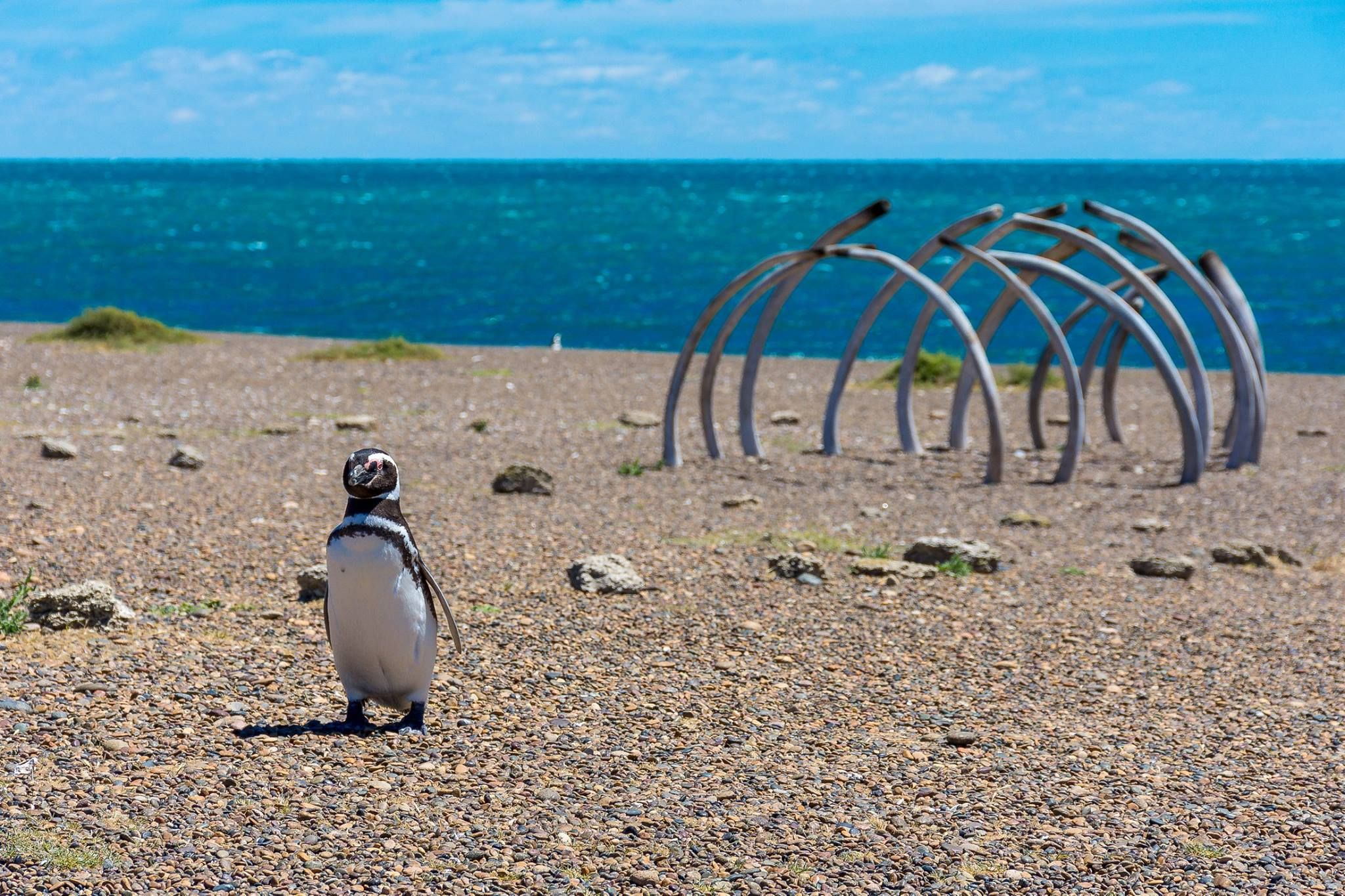 Pingüinera de la estancia San Lorenzo
