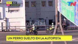 VIDEO: El polémico comentario de un periodista por un perro en la autopista