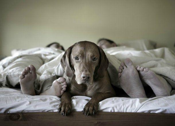 Es bueno dormir con sus mascotas