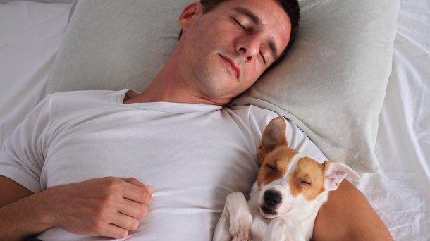 Colecho animal: ¿es saludable dormir con las mascotas?
