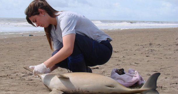 Playas limpias, ecología y conciencia social: el plan de Mundo Marino para el verano 2018<br>