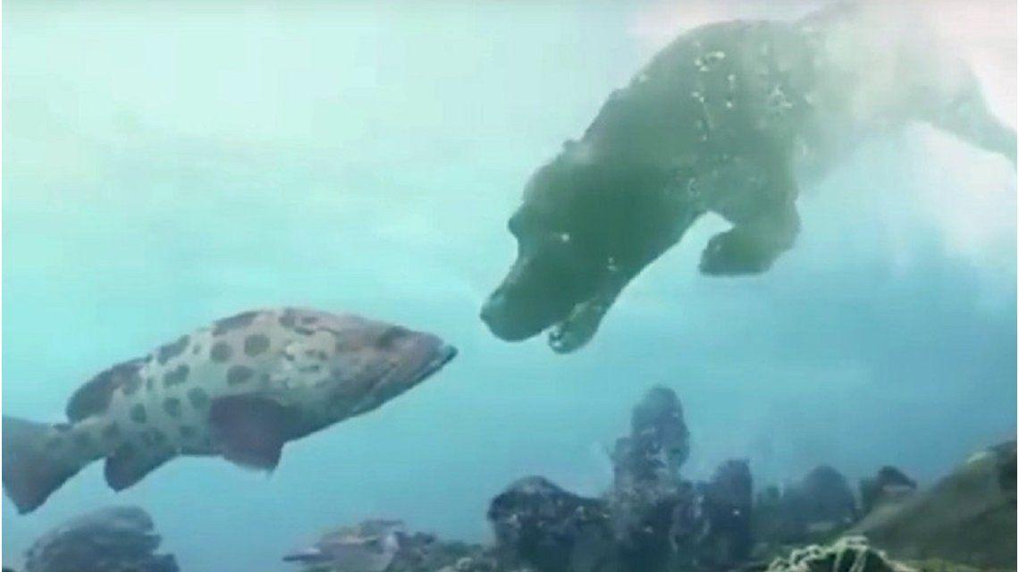 Científicos rusos crean un método para respirar bajo el agua que podría salvar vidas