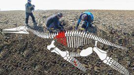 El esqueleto del animal habría medido unos seis metros de largo