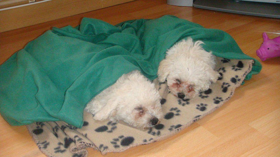 Los adorables perritos fueron la pista decisiva en la investigación