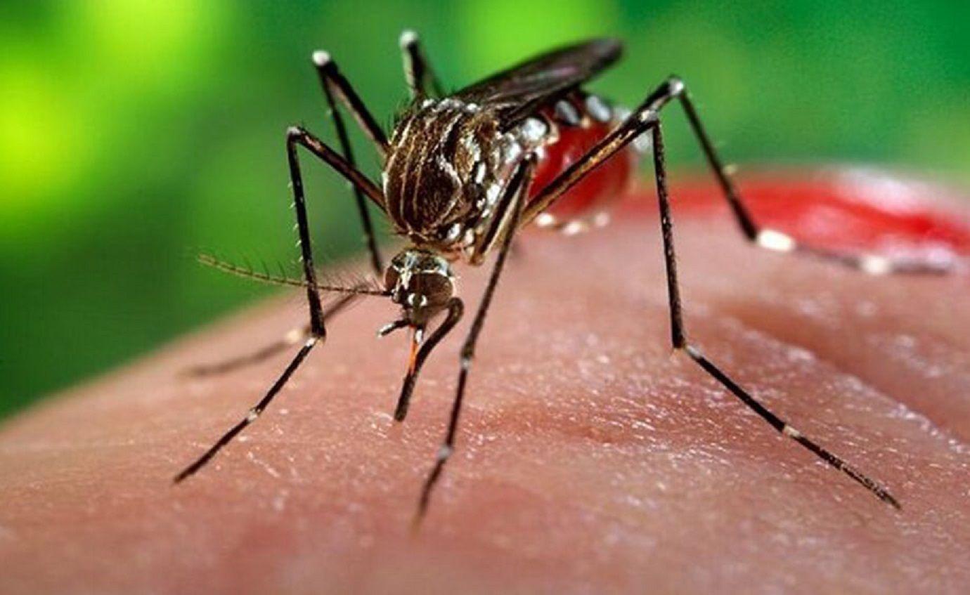Confirman 4 casos de dengue en la Ciudad: todos fueron contraídos en Brasil