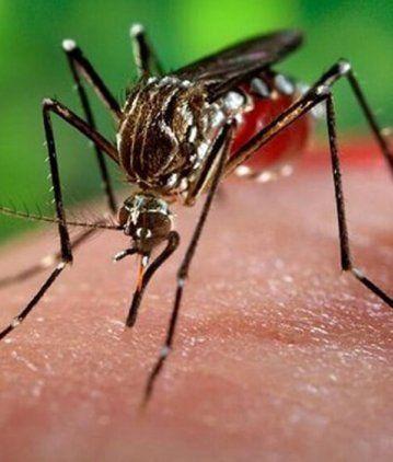 En verano hay riesgo de contraer Dengue y la fiebre chikungunya.