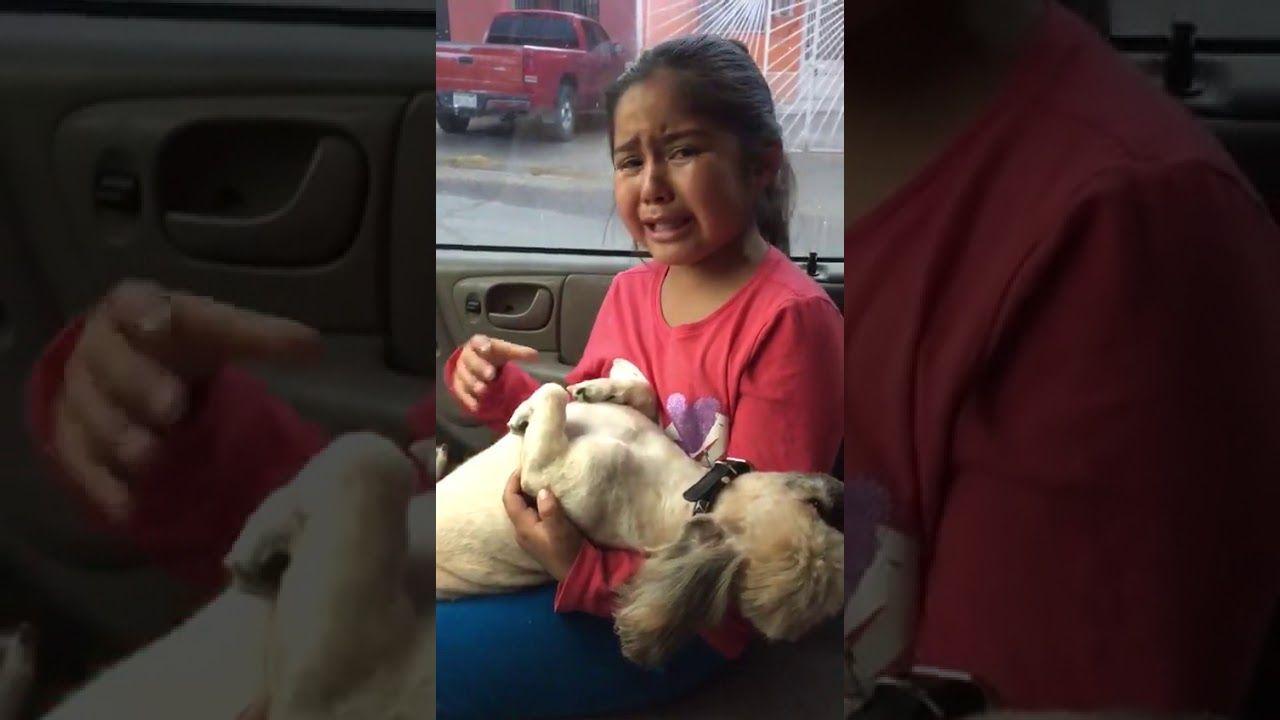 La nena que llora desconsolada por el corte de pelo de su perro