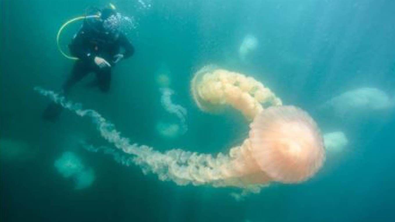 Medusas en Puerto Madryn