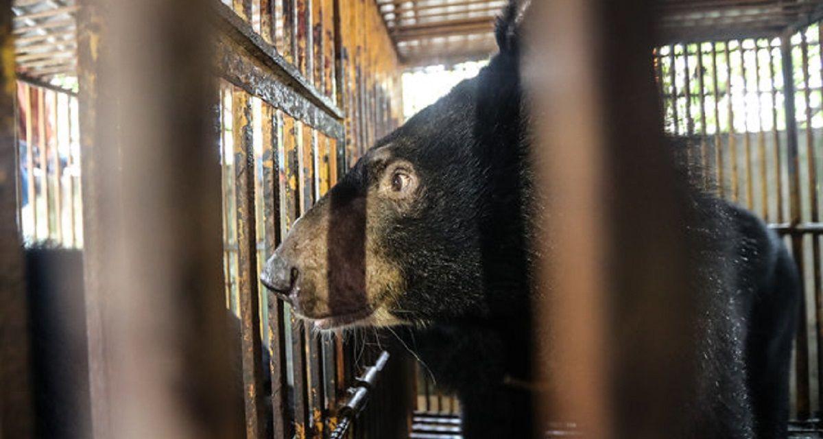 VIDEO: Tras pasar 10 años en una jaula, un oso vio la luz por primera vez