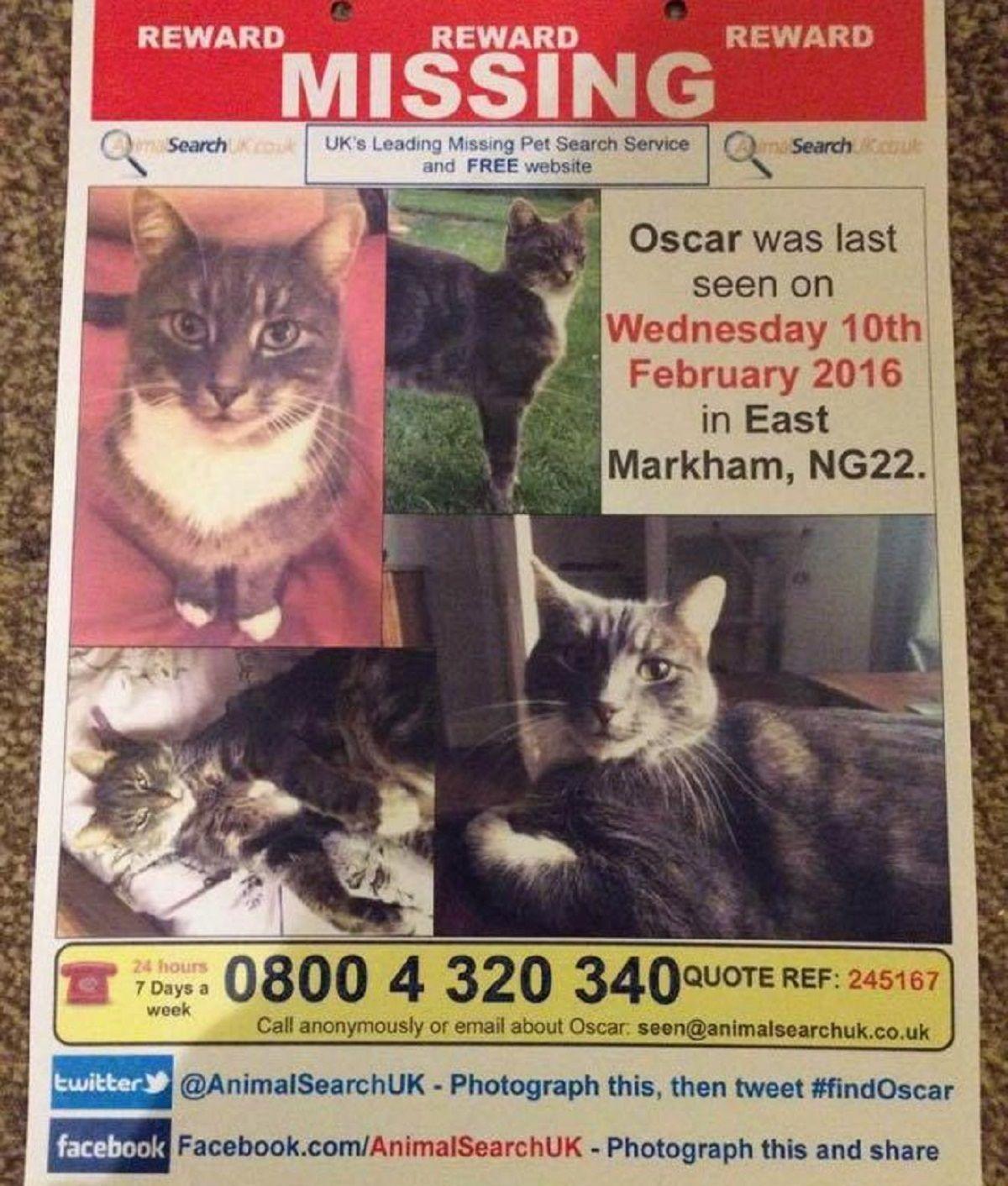 Inglaterra: buscan a un hombre que habría matado a 400 gatos
